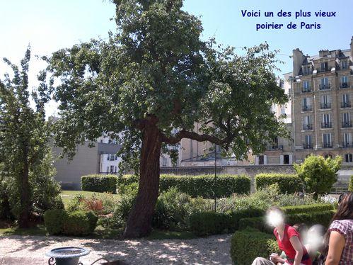 Jardin-injs-copie-1.jpg