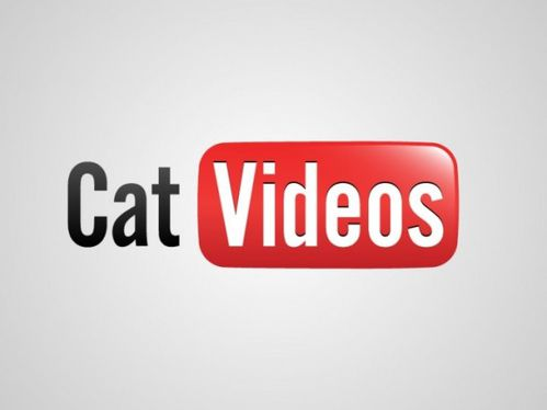 cat-video-youtube-logo.jpg