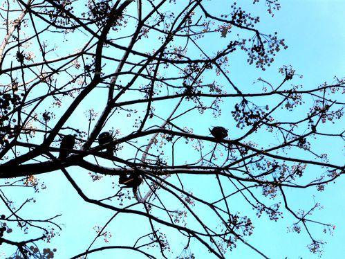 maison-d-oiseaux-contrastee.jpg