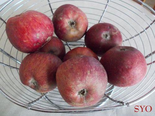 Pommes-tombees-Mamigoz.jpg