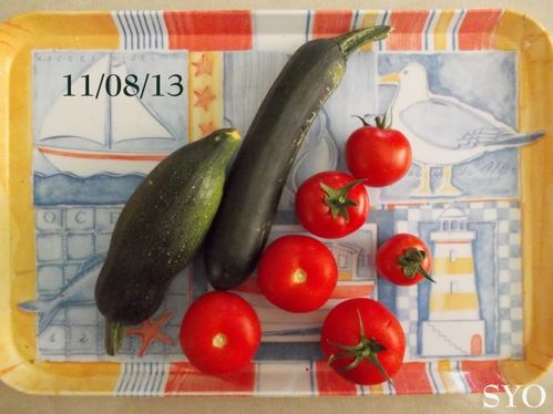 Tomates-courgettes-semaine-33-1-Mamigoz.jpg