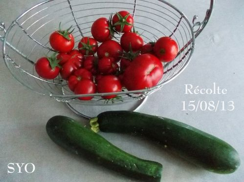 Tomates-courgettes-semaine-33-3-Mamigoz.jpg