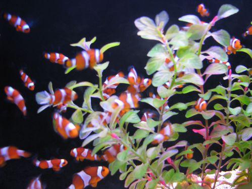 aquarium Saint Gilles 006