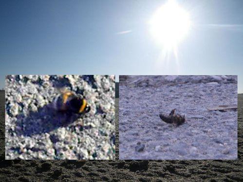 Durban insectes pollinisateurs