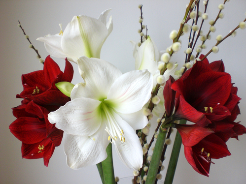 Tourisme for Amaryllis interieur