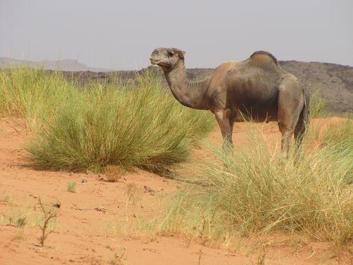 Maroc-2010-204.jpg
