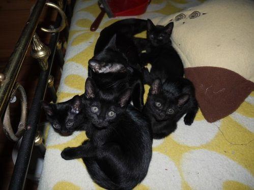 chatons-dubai-26-11-12-001.JPG