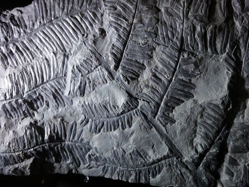 fossile 4