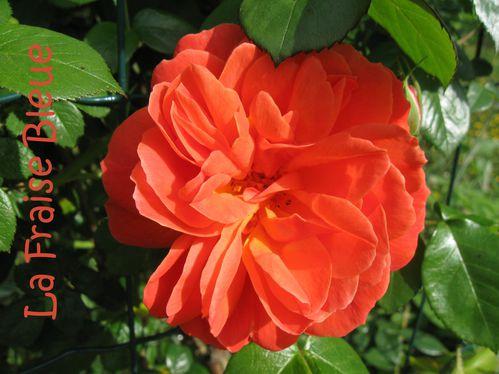 Mon-jardin 6051