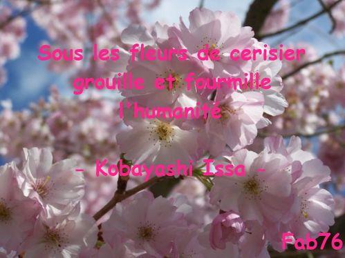 haiku-issa-cerisier.jpg