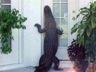alligator-at-door.jpg