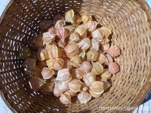 Coqueret du Péron fruit 03