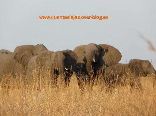 Africa.Botswana (Camp Selinda-Linyanti)a.24