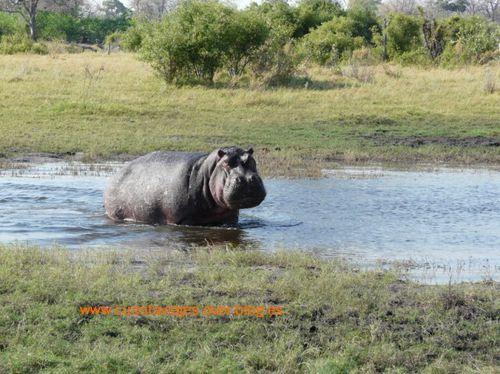 Africa.Botswana (Camp Selinda-Linyanti)a.5