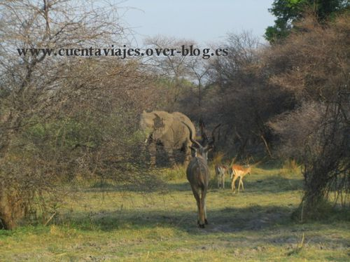 Africa.Botswana.a.Moremi.Mombo Camp29