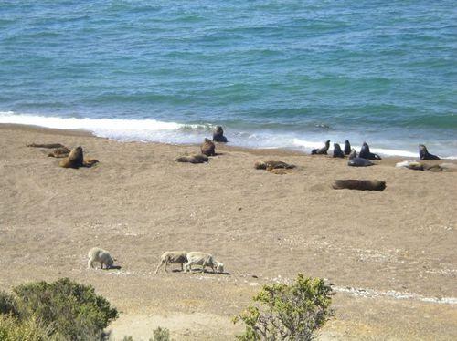 Punta Pombo. Península Valdés6