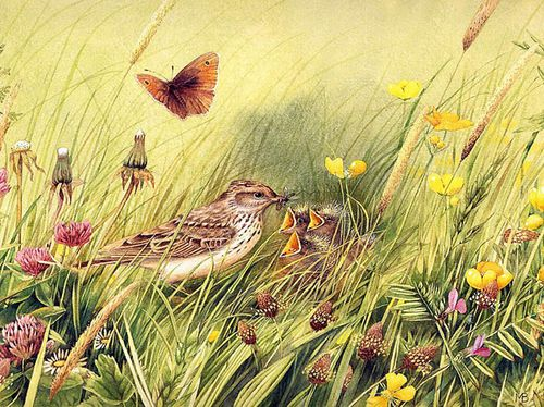 Marjolein Bastin~Bird InThe Meadow fond d'écran