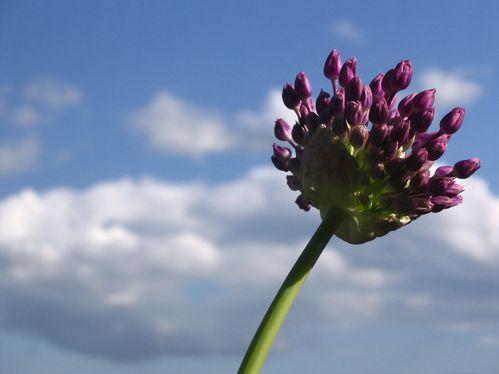 fleurs-012.jpg