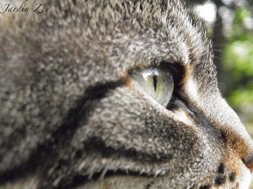 Shiva-yeux 3
