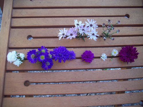 ASTER PLANCHE