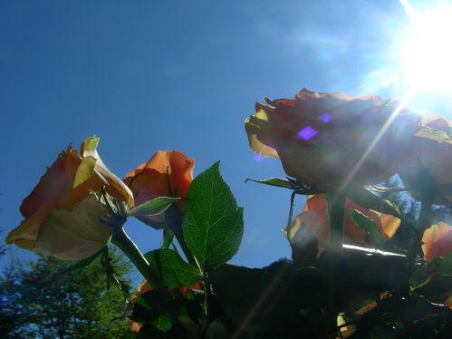 Blumen-und-Pflanzen-Mizi-Garten-017.jpg
