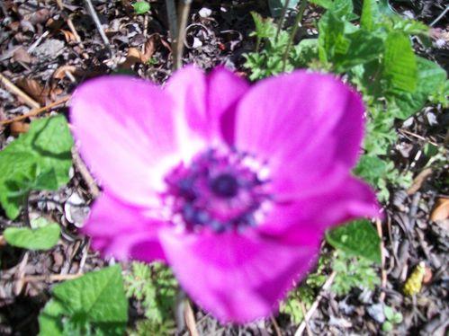 arbre-de-paques-et-fleurs-1-011.jpg