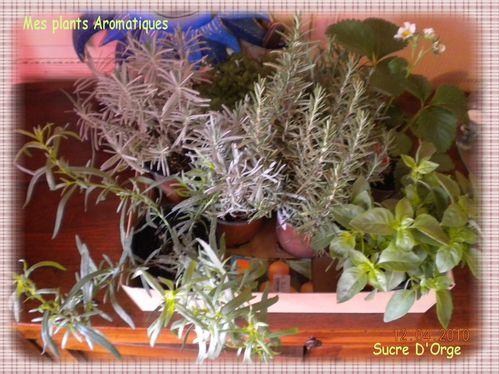 Mes plants Aromatiques!!! (2)