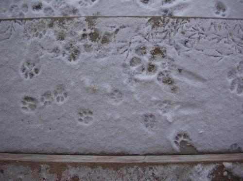 Dimanche-glace-008.JPG