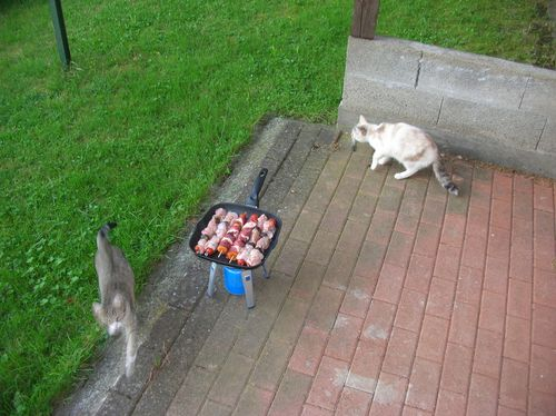 Pesee-des-chats-003.JPG