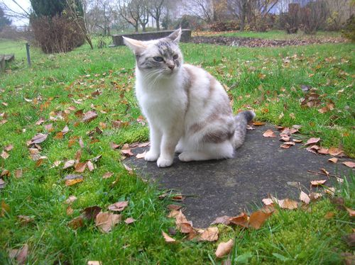 Chats-d-automne-002.JPG
