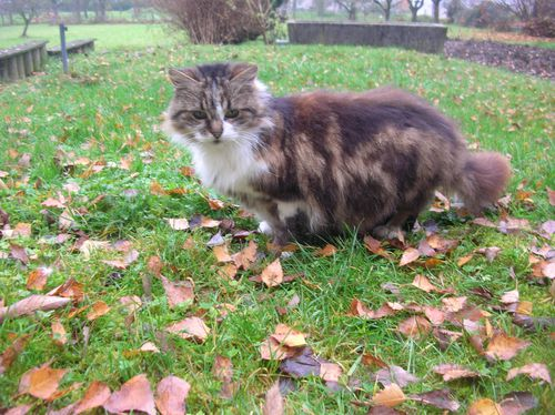 Chats-d-automne-004.JPG