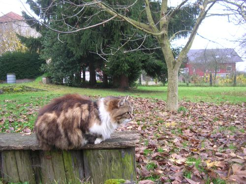 Chats-d-automne-016.JPG