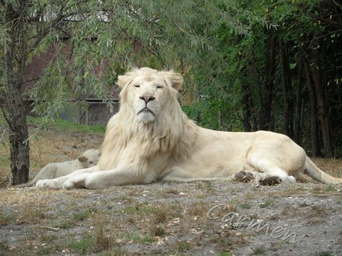 SAM_2024-border-lion.jpg
