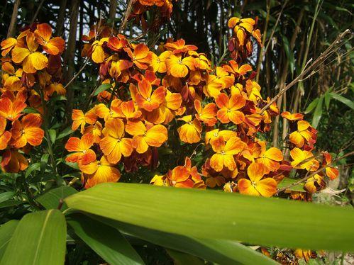 mars 2011 fleurs 012