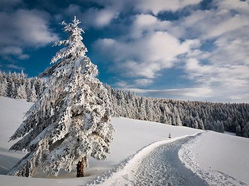 paysage-hiver-122