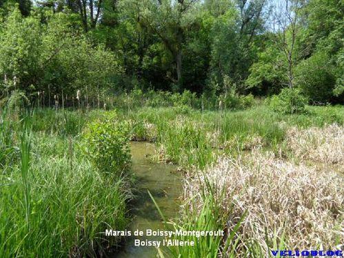 Boissy-Marais0512-1