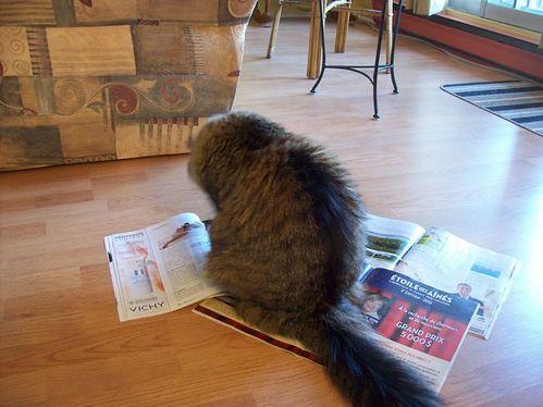magazines-mimi.jpg