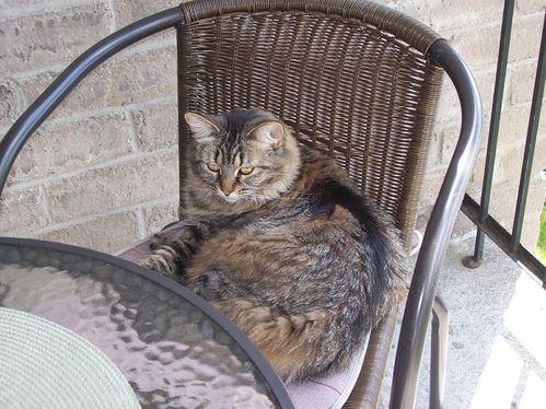 mimi-balcon-090612--3.jpg