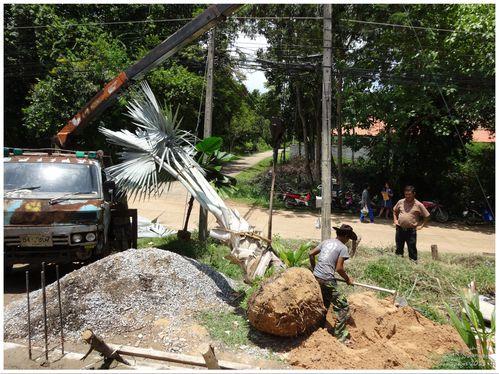 palmier 14 modifié-1