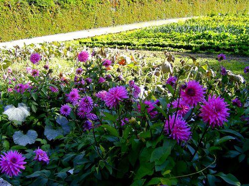fleurs-fushias-1.jpg