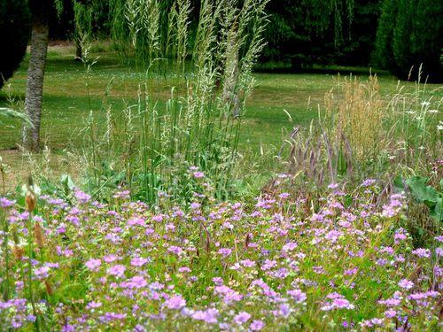 fleurs-violettes-et.jpg