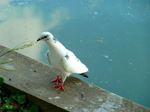 pigeon-seul-brindille.jpg