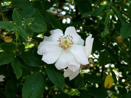 rose-une-banche-lumix.jpg