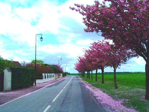 mars-route-fleurs.jpg