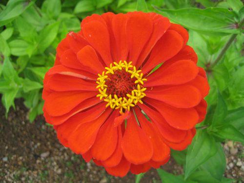 mes-fleurs 7289