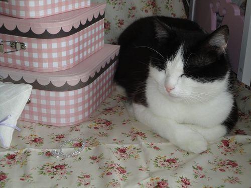chat-qui-pose-avec-les-cadeaux-de-maria0707111.jpg