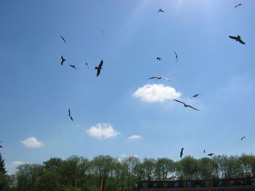 bal_oiseaux_fantomes_puyfou.JPG