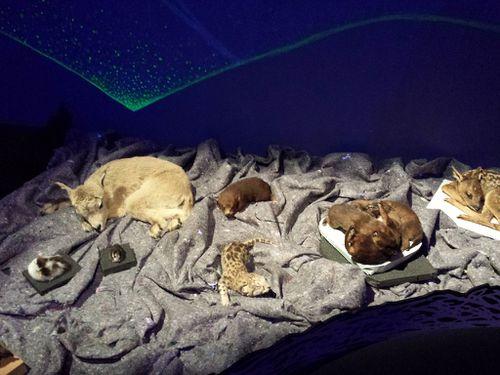 animaux-sommeil.jpg