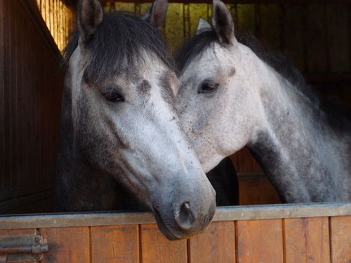 calin-cheval