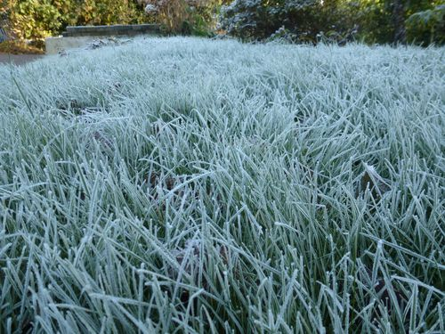 2012-12-12-Givre (1)
